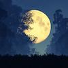 Pratique du soir : l'examen de conscience chez les Stoïciens